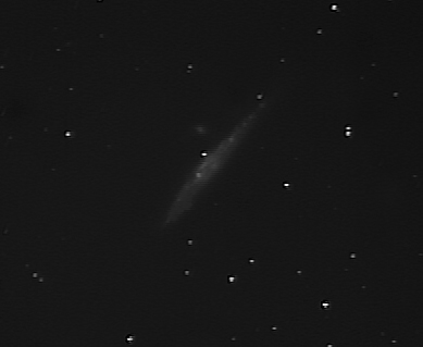 whale and pup with Meade 127EDT at SGL6