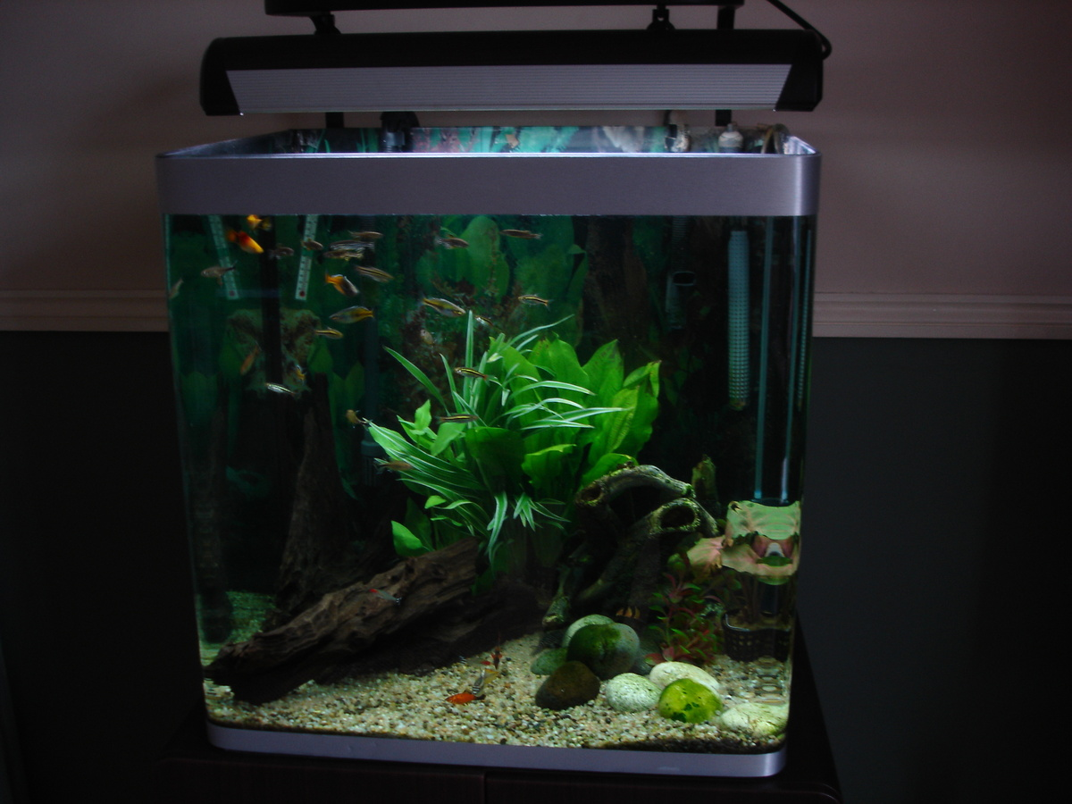 my tank after a big clean up
