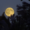 578e9c8acb866-FullMoon002.png