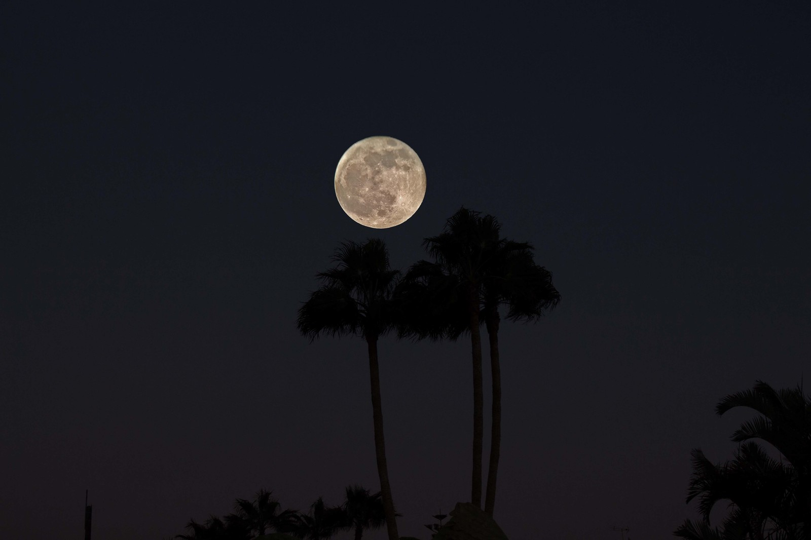 Moon over Palm trees