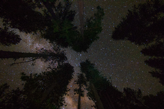 Trees And Stars (1 of 1)